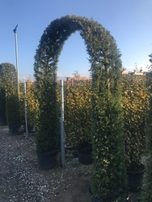 Various Four Metre Arches Made Of Wisteria, Conifer and Beech